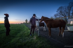 Dennis Kai-Uwe Pferd