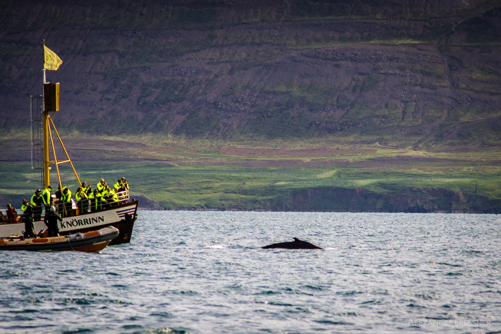 Whale Watching Hjalteyri
