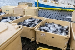Stykkisholmur Fischfang