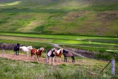 Pferde Island
