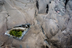 Moos Steinwand