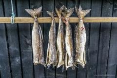 Fseroeer Stockfisch